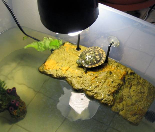 Our Turtles